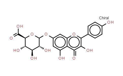 Kaempferol 3-O-b-D-glucuronide